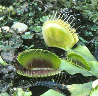 terrestrial and aquatic plants