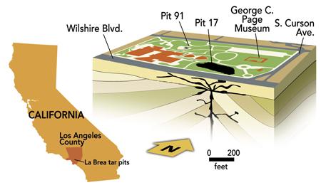 Natural History Magazine - Where is brea california on the california map