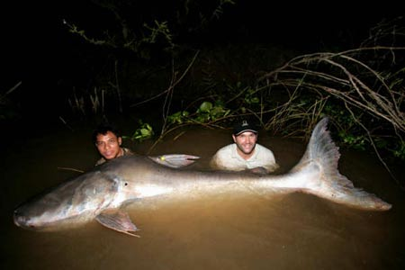 Zeb Hogan and the Giant Catfish