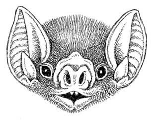 How to Draw a Vampire Bat, Step by Step, Animals For Kids ...