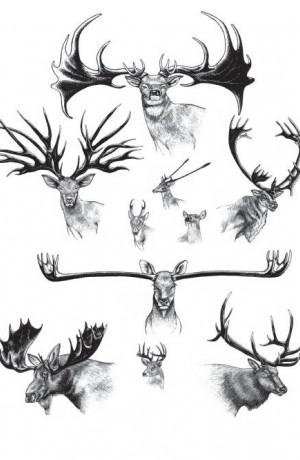 extravagant weaponry natural history magazine