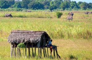 Bantu farmer