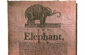 The first elephant in America walked inn Salem, MA.