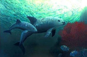 Vaquita Mother and Calf 2