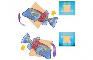 blowfish diagram