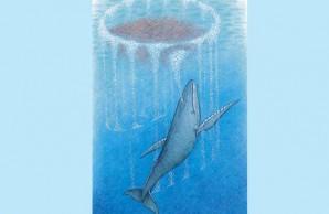 whale in bubble net