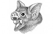 Bat With Cup-shaped Oral Glands