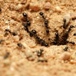 ants nature.net