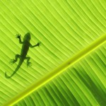 gecko silo