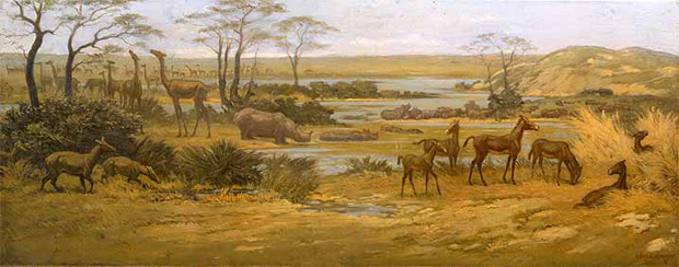 Rhinoceros, camels, and horses of the Miocene era