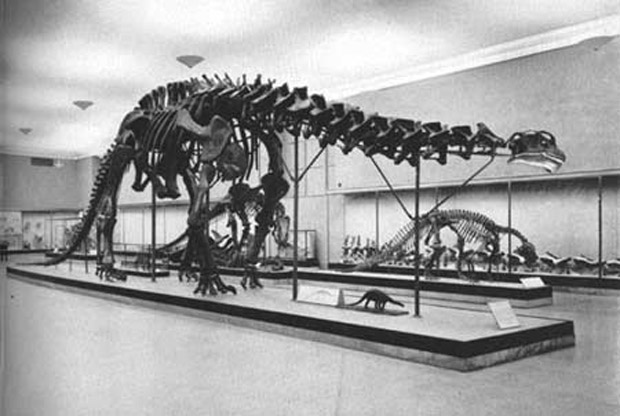 sauropod skeleton